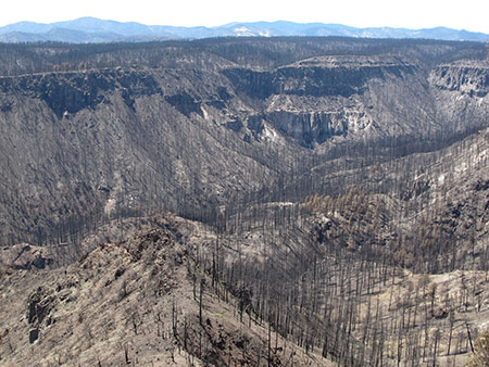 Image to accompany Under Threat: Major Threats to Forests in a Warmer World: a story of drought and fire event
