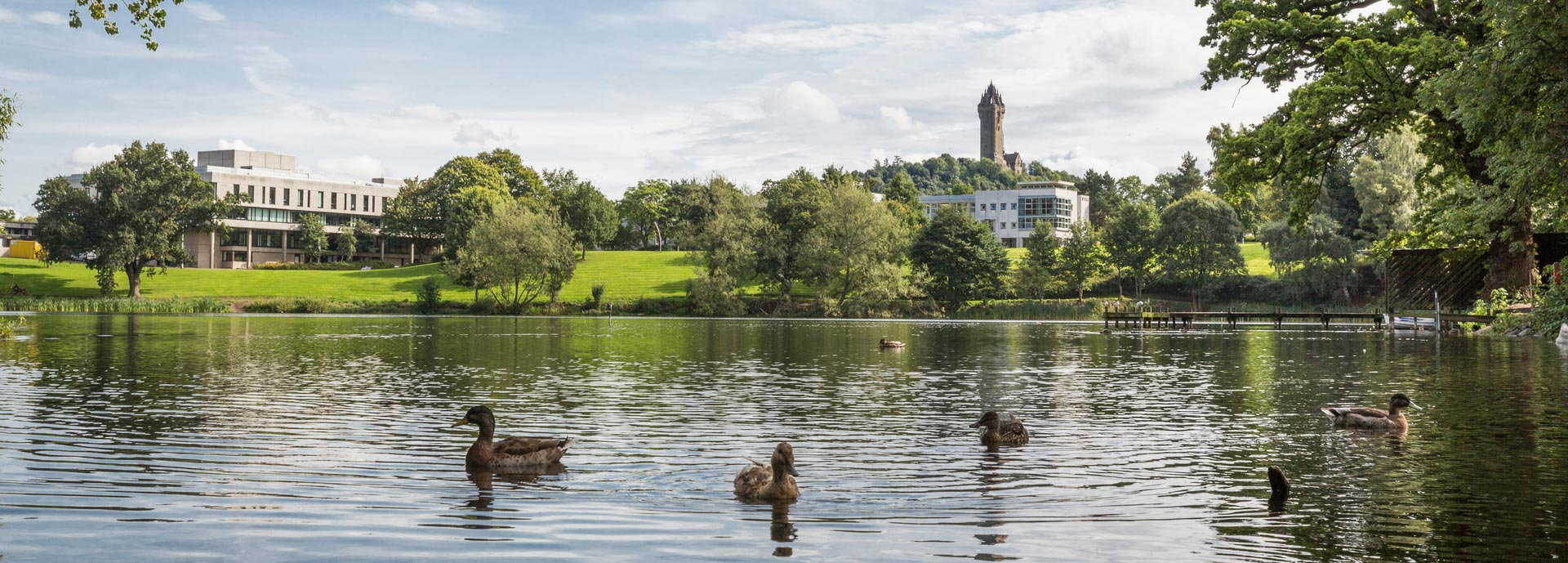 Ducks on loch with University of Stirling and Wallace Monument in background