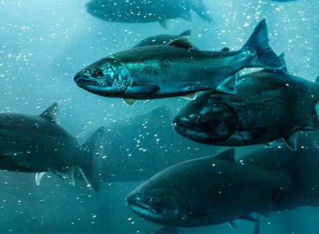 Salmon by-products could generate £23m extra for industry