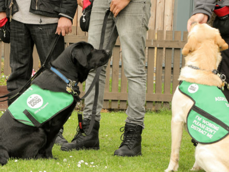 Paws for Progress unveils new dementia dog training project