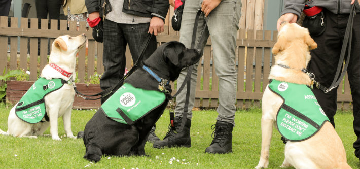 Paws for Progress unveils new dementia dog training project  81b10c2a5