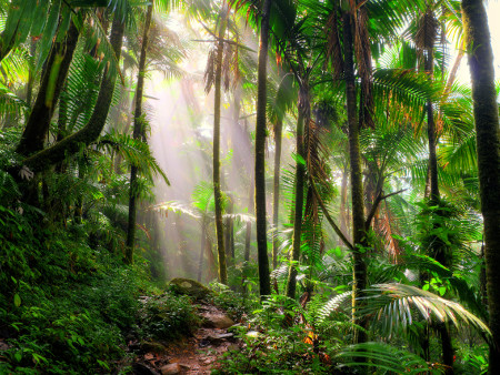 Tree species vital to restoring disturbed tropical forests