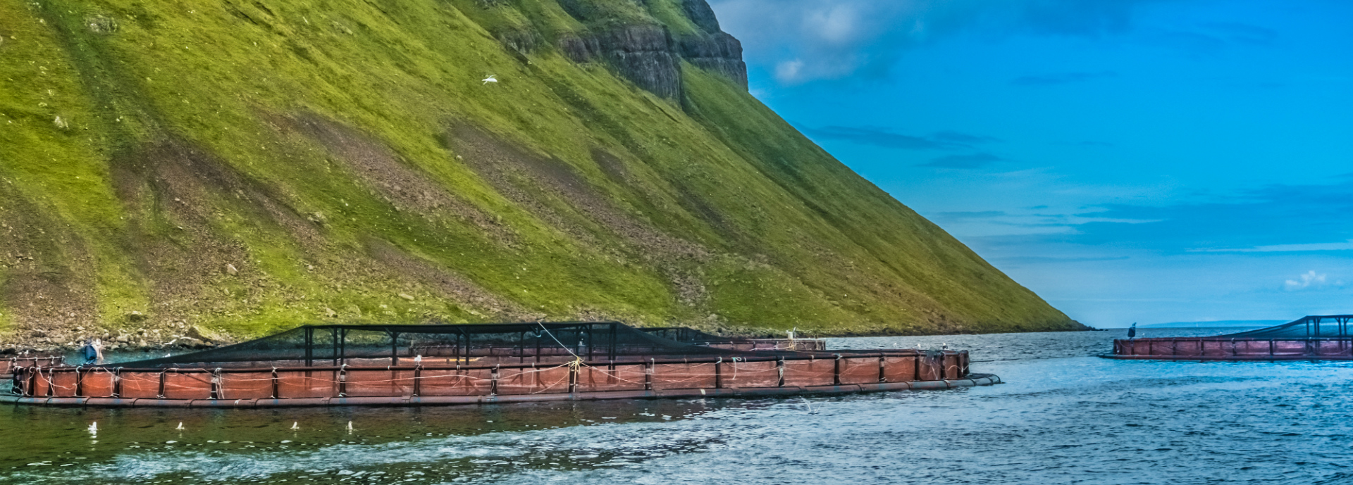 Salmon farm, Scotland
