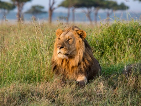 Banning trophy hunting can have a detrimental impact, experts say
