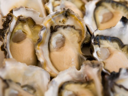 Farmed oysters able to protect themselves from acidification