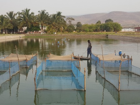 Inclusive aquaculture can improve the lives of poor farmers