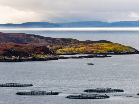 Researchers explore aquaculture's progress over the past two decades