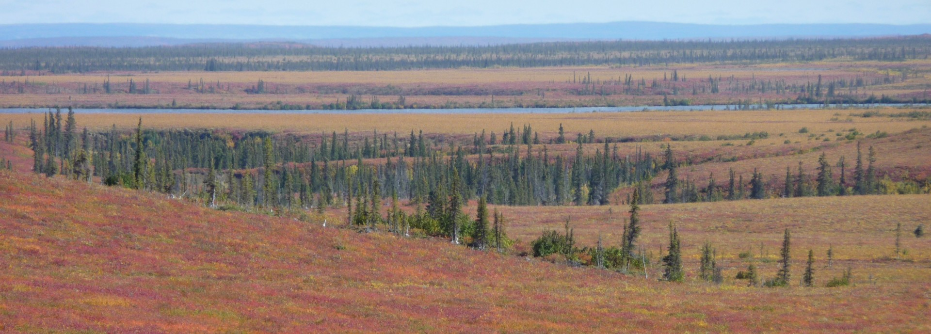 Banner image for  Arctic plants may not provide predicted carbon sequestration potential