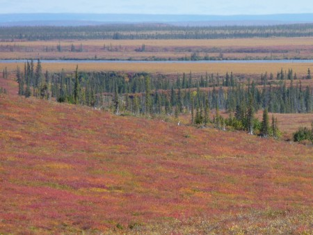 Arctic plants may not provide predicted carbon sequestration potential