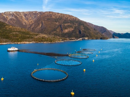 Stirling scientists report on animal welfare in aquaculture
