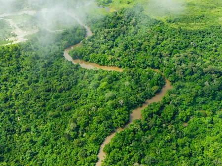 Stirling experts inform new study on world's tropical forests