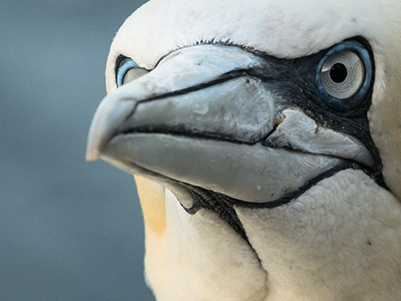 Image of sea bird by Danni Thompson
